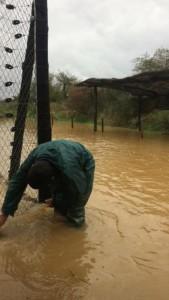 mona floodings