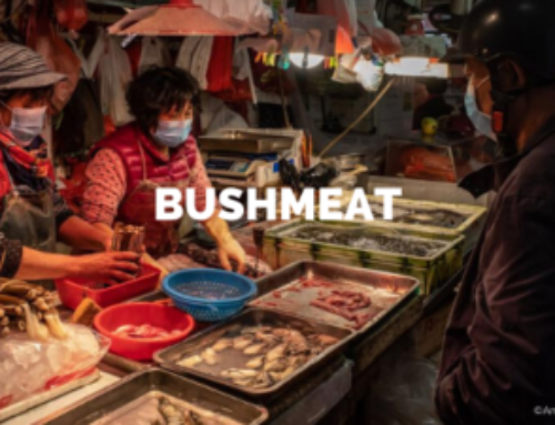 Bushmeat and wildlife trade