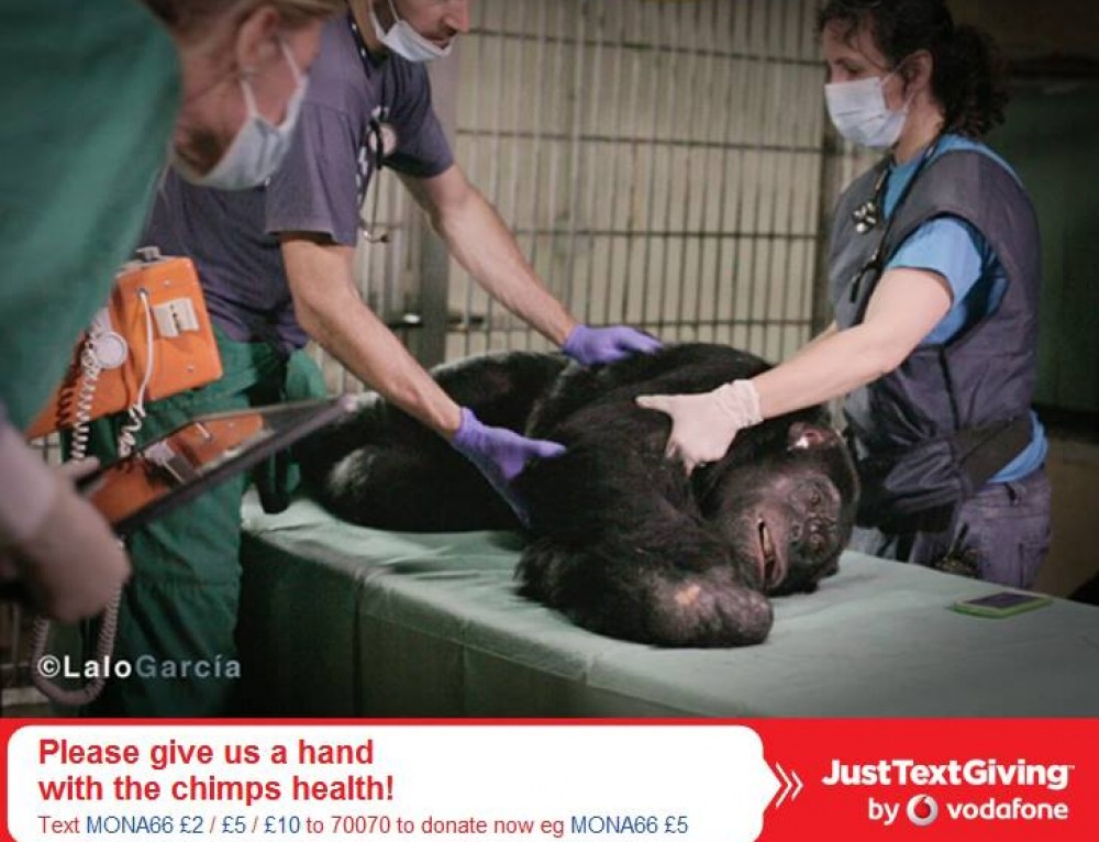 Only one short text message with you mobile phone to help the chimps!