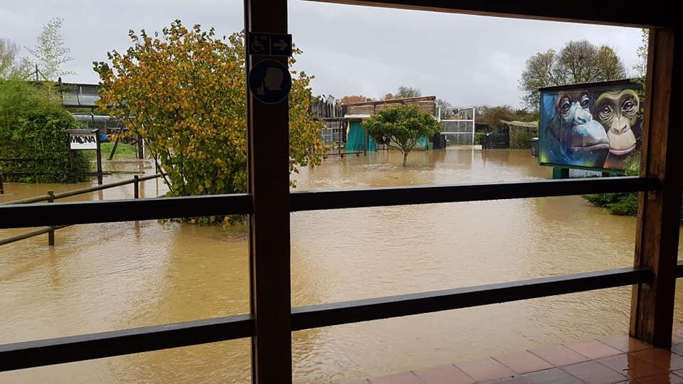 MONA floods