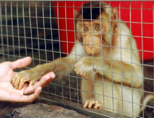 Animal Advocates Welcome UK's Action Plan for Animal Welfare